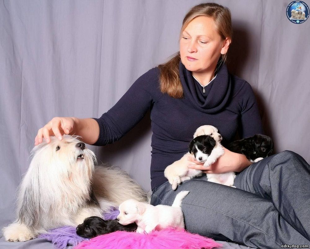 Порода собак ОДИС, кинолог Бахарева Ирина